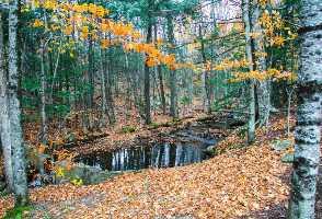 1-Day Boston to Flume Gorge, Apple Picking and White Mountain Fall Foliage Tour