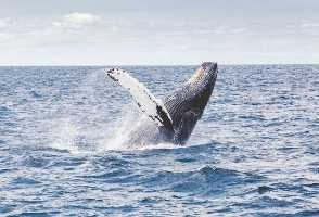 1-Day Boston to Plymouth Plantation and Whale Watch Tour