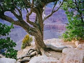 1-Day Las Vegas to Grand Canyon South Rim Tour