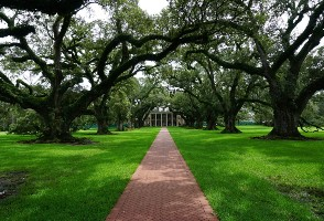 1-Day New Orleans to Mardi Gras World, Oak Alley Plantation and Swamp Tour