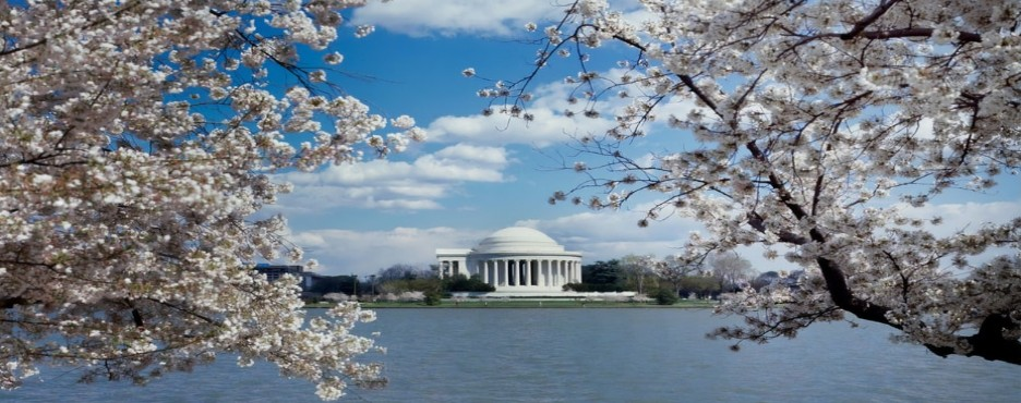 1-Day New York/New Jersey to Washington DC Cherry Blossom Festival Tour