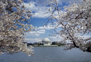 1-Day New York/New Jersey to Washington DC Cherry Blossom Sightseeing Tour