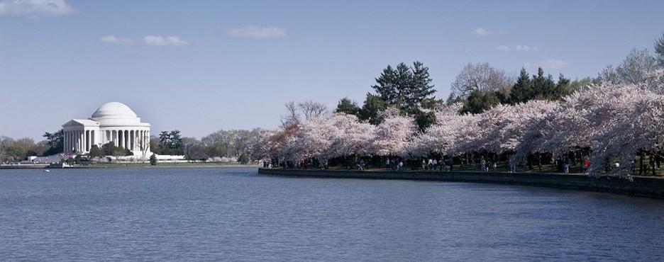 1-Day Philadelphia to Washington DC Cherry Blossom Festival Tour