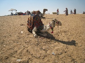 16 Hours Merzouga Camel Trekking, Erg Chebbi Tour