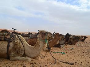 2-Day Fes to Ifrane, Arfoud and Merzouga Desert Tour