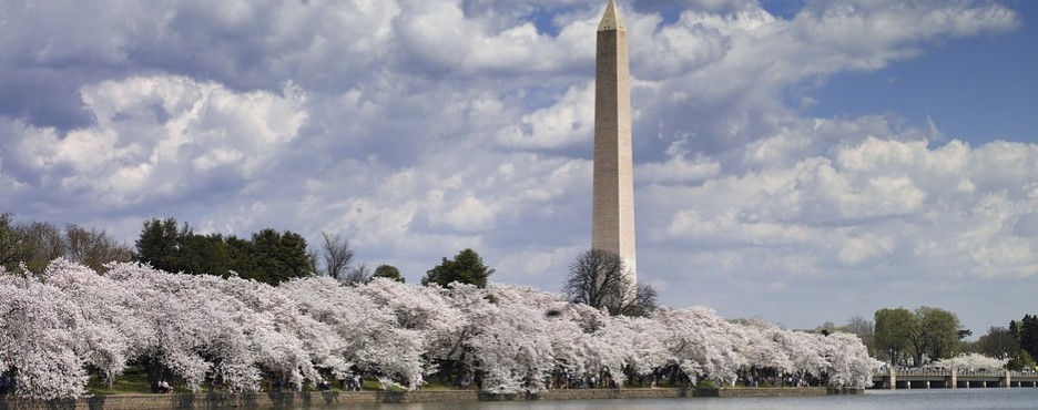 2-Day New York/New Jersey to Washington DC Cherry Blossom and Philadelphia Tour
