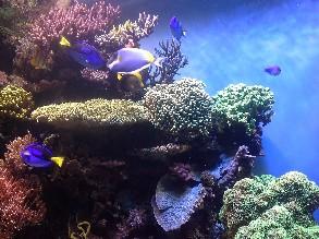 1 Hour to 2 Hours Aquarium of the Bay Tour