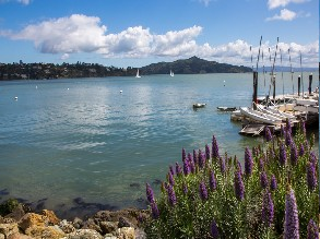 4-Hours Muir Woods National Monument, Golden Gate Bridge and Sausalito Tour