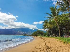 5-Day Oahu to Pearl Harbor, Waikiki Beach, North Shore Big Circle Island Tour (Free Airport Pickup)
