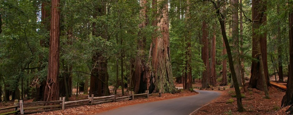 5-Day San Francisco to Portland, Redwood National Park and Seattle City Tour - SEA OUT