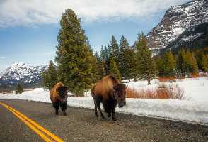 6-Day Los Angeles/Las Vegas to Mt Rushmore, Antelope Canyon, Yellowstone National Park and Salt Lake City Tour - SLC OUT