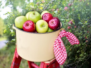 Apple Picking Tours
