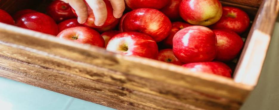 1-Day Chicago to Indiana Dunes National Park and Stover's Farm Market Apple Picking Tour