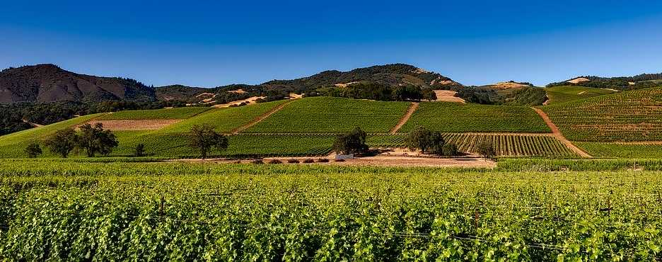 1-Day San Francisco to Napa Falls, Wine Vineyard and Napa Valley Tour