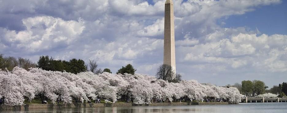 3-Day Boston to Longwood Gardens, Mystic Aquarium and Washington DC Cherry Blossom Tour