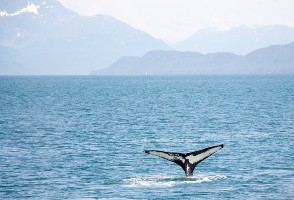 2-Day Vancouver to Tofino whale Watching, Pacific Beach and Vancouver Island Tour